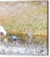 Mixed Shore Birds Canvas Print