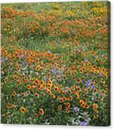 Mixed Wildflowers Blowing Canvas Print