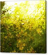 Painted Garden  Canvas Print