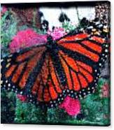 Mnarch Butterfly Canvas Print