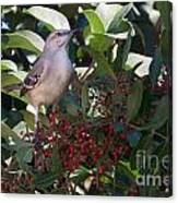 Mocking Bird And Berries Canvas Print