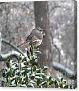 Mockingbird Cold Canvas Print