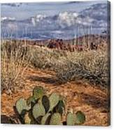 Mojave Desert Cactus Canvas Print