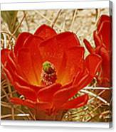 Mojave Mound Cactus Art Poster - California Collection Canvas Print