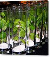 Mojitos In The Making Canvas Print