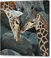 Mom And Baby Giraffe Canvas Print