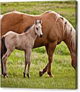 Mom And Foal 2 Canvas Print