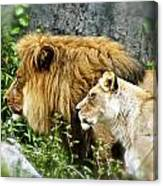 Mom And Pop Lion Canvas Print