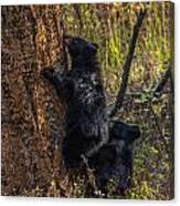 Mom Said Up The Tree Canvas Print