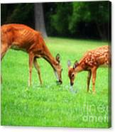 Mom Sharing A Snack With Her Baby Fawn Canvas Print