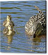 Momma Mallard And Her Ducklings Canvas Print