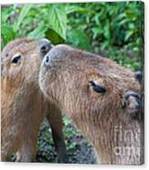 Mommy Kisses Canvas Print