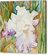 Mom's Iris Canvas Print