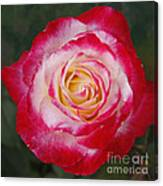 Mom's Red Rose  Canvas Print