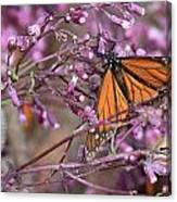 Monarch 1 Canvas Print