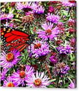 Monarch Among The Asters Canvas Print