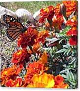 Monarch Among The Marigolds Canvas Print