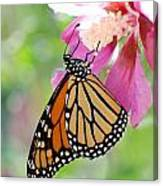 Monarch And Hibiscus No.2 Canvas Print