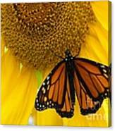 Monarch And Sunflower Canvas Print