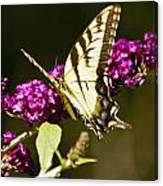 Monarch Butterfly 5 Canvas Print