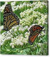 Monarch Butterfly 56 Canvas Print