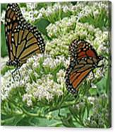 Monarch Butterfly 57 Canvas Print