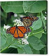 Monarch Butterfly 69 Canvas Print