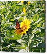 Monarch Butterfly And Guest Canvas Print