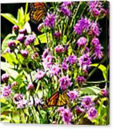 Monarch Butterfly Couple Canvas Print