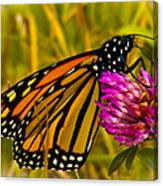 Monarch Butterfly On Flower Canvas Print