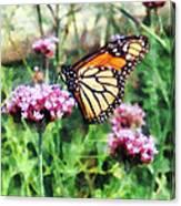 Monarch Butterfly On Pink Lantana Canvas Print
