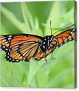 Monarch Butterfly Rocking Chair Canvas Print