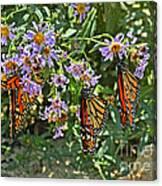Monarch Butterfly Trio Canvas Print