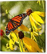 Monarch Days 1 Canvas Print
