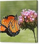Monarch Flutterby Canvas Print