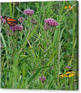Monarch In The Wildflowers Canvas Print
