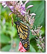Monarch Ins 15 Canvas Print