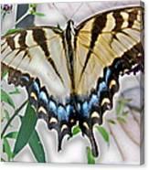 Monarch Majesty Canvas Print