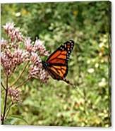 Monarch Of The North Canvas Print
