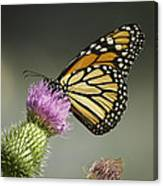 Monarch Of The Wild Canvas Print