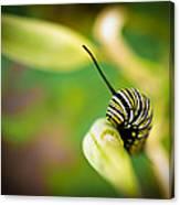 Monarch Offspring Canvas Print