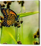 Monarch On Her Throne Canvas Print