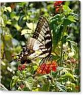 Monarch Pause Canvas Print
