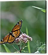 Monarch Perch Canvas Print
