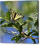 Monarch Tranquility Canvas Print