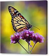 Monarch With Sunflower Canvas Print