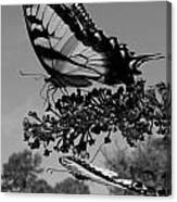 Swallotail In Black And White Canvas Print