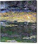 Monetish Egret Canvas Print