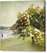 Monet's Tree Canvas Print