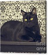 Mongo The Robust Cat Canvas Print